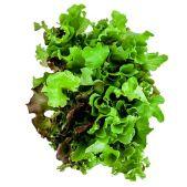 leafy-greens-eyes-400x400